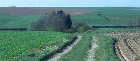 Sunken Lane viewed from Hawthorn Ridge